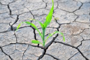 Think Accountants Richmond desert-plant